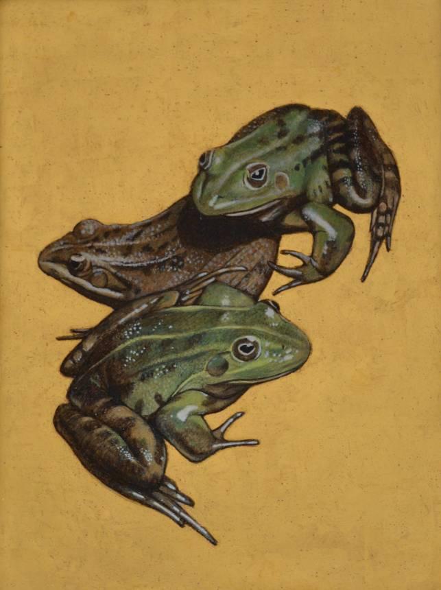 Frog conversation