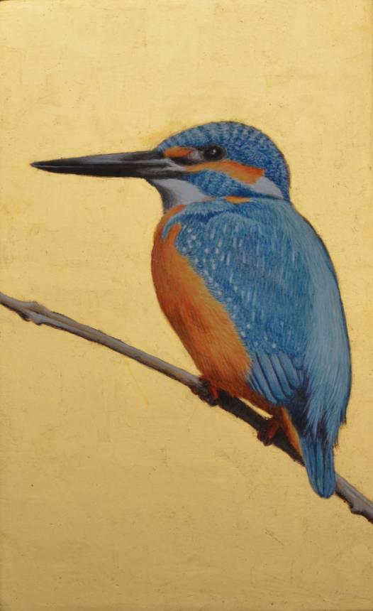 Kingfisher (Martin pescatore)