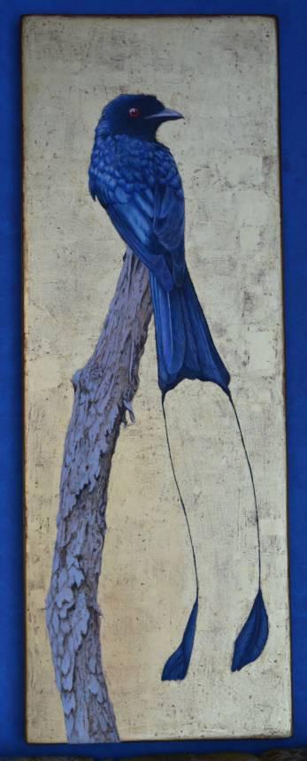 Drongo coda a racchetta